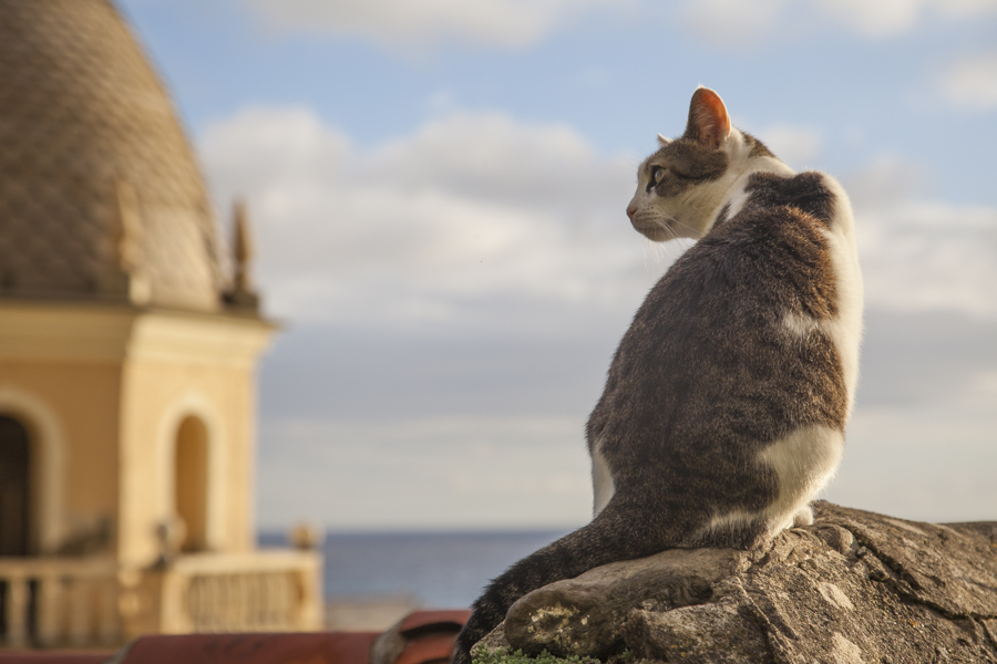 A cat taking a look at the Vernazza village in Cinque Terre. Photo: John Einar Sandvand