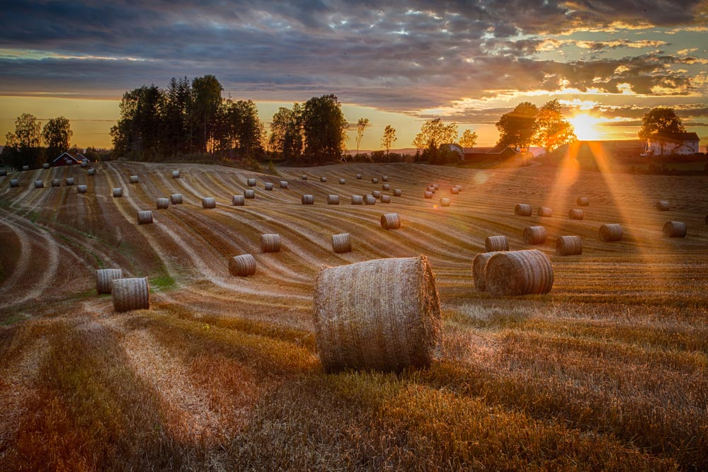 Sunset in the farm field. Photo: John Einar Sandvand