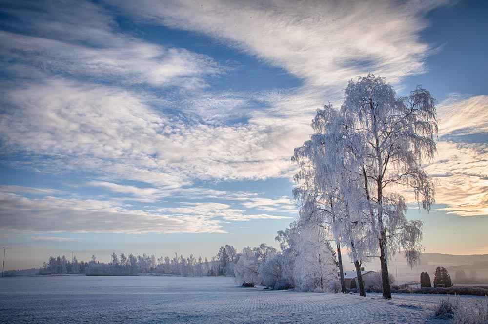 White winter. Photo: John Einar Sandvand