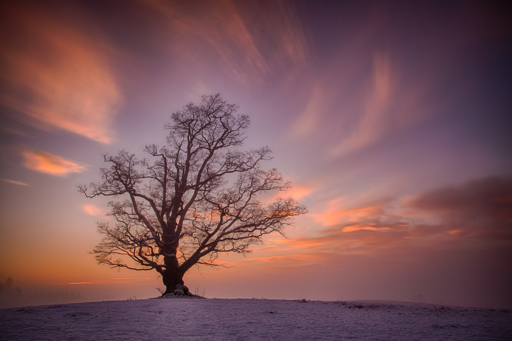 The old Ås oak - taken with a strong ND filter to get the blurry clouds. Photo: John Einar Sandvand