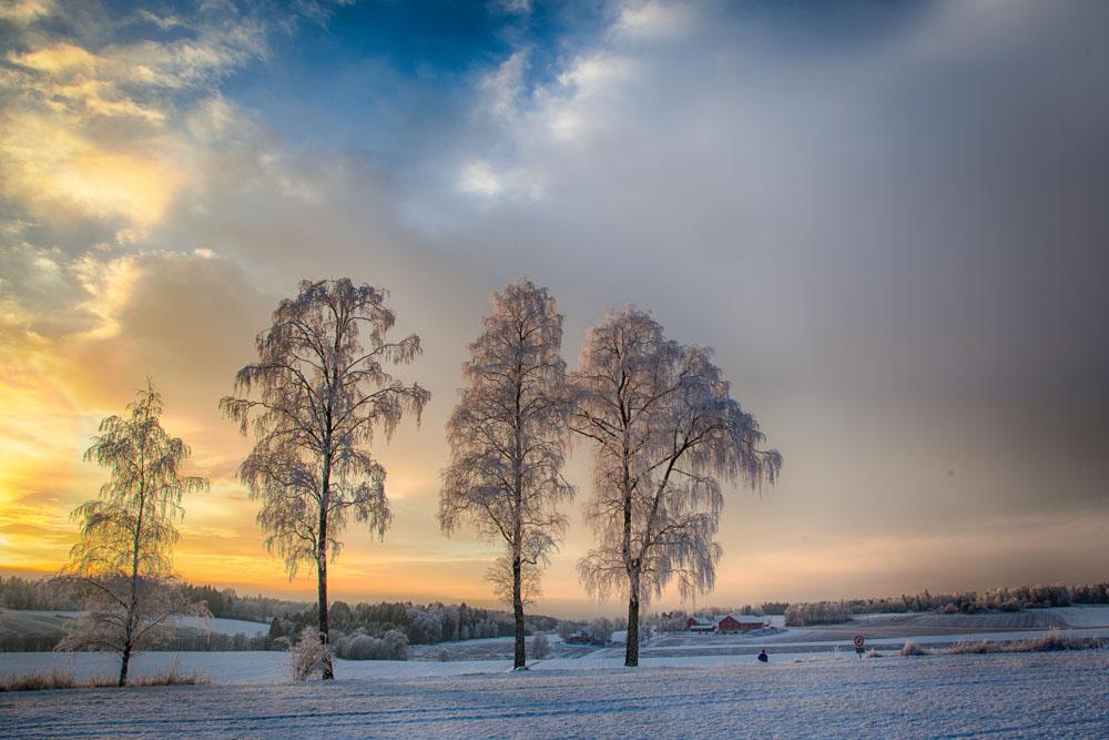 Vinterlys. Foto: John Einar Sandvand