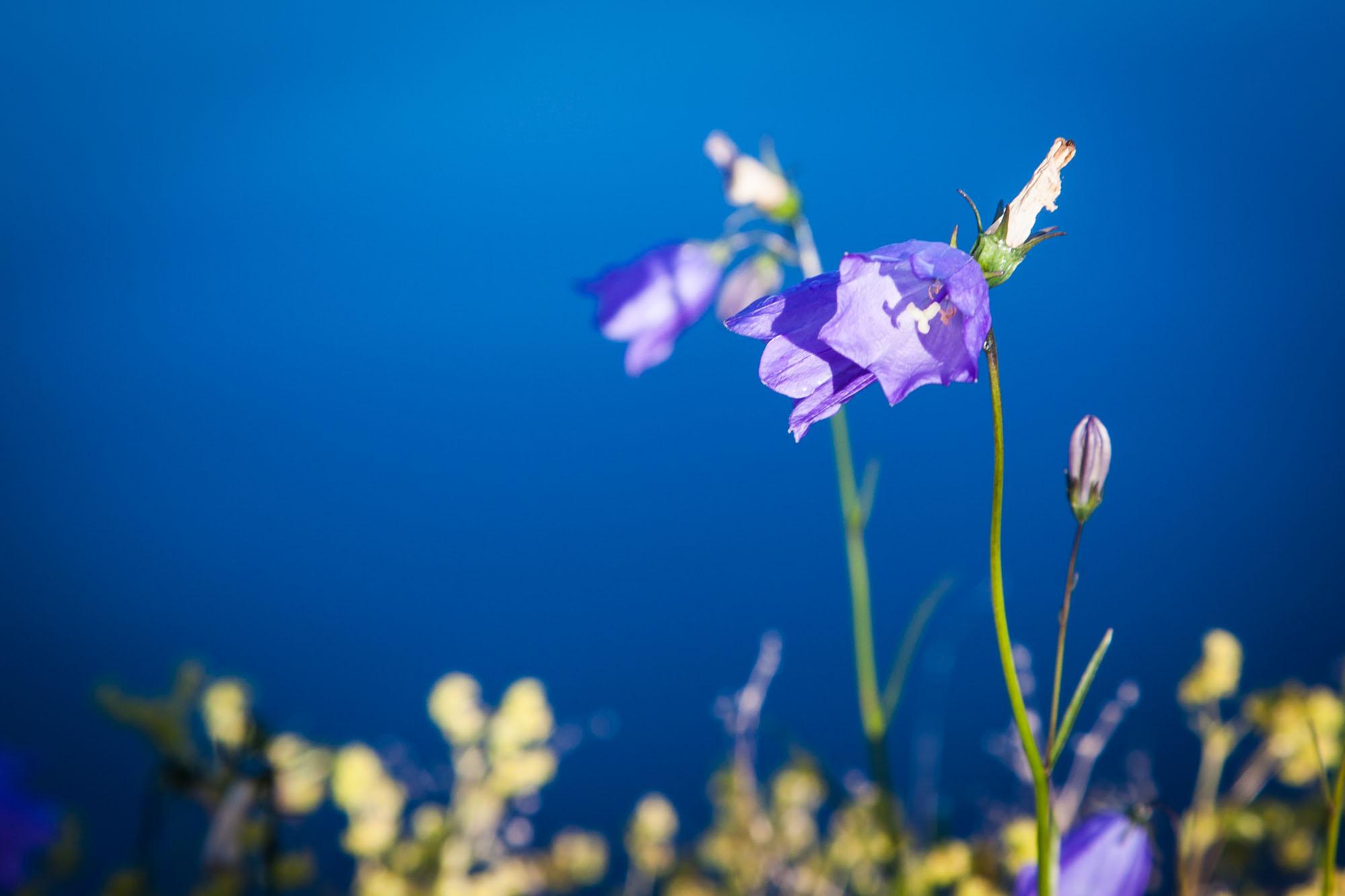 spring-4